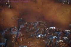 Fasu.-2014-detail Caoimhghin O Fraithile